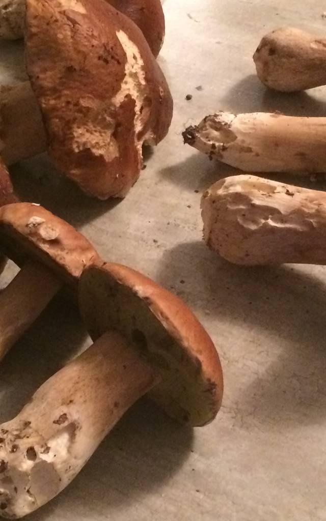 Régal d'automne : le velouté de cèpes
